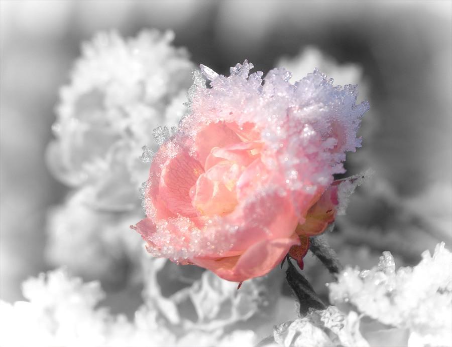 Скачать песню цветут цветы